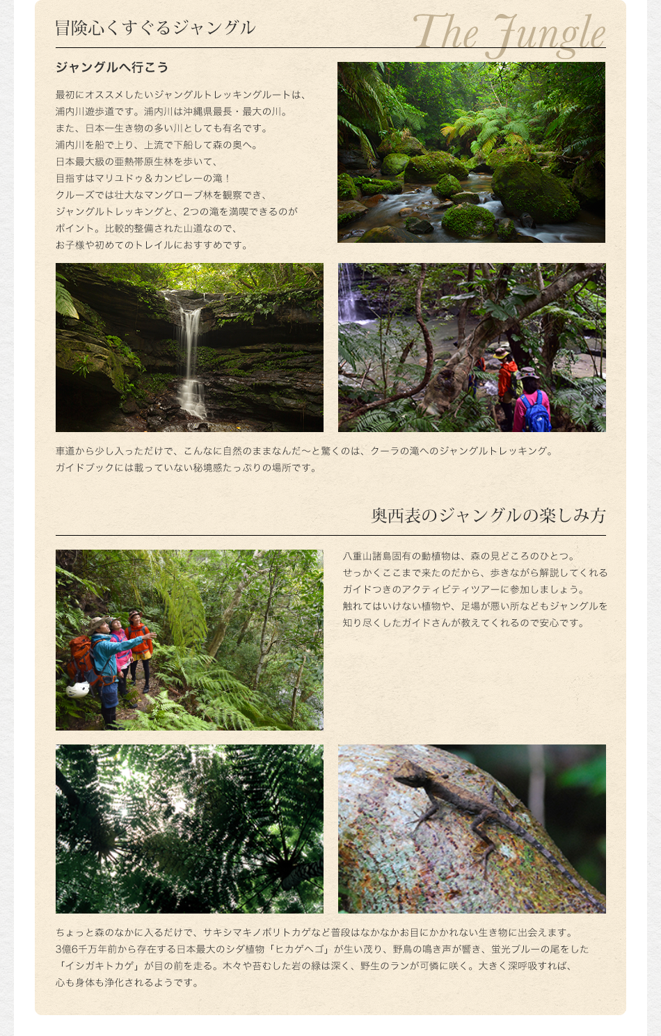冒険心くすぐるジャングル